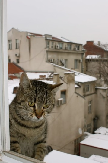 Cat on a window ledge with a view of snowy Sofia Bulgaria