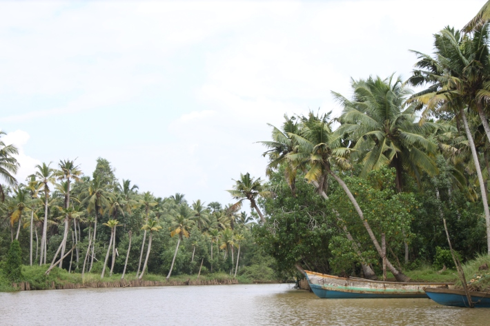 Backwaters of Neyyar isthmus behind Poovar Golden Beach
